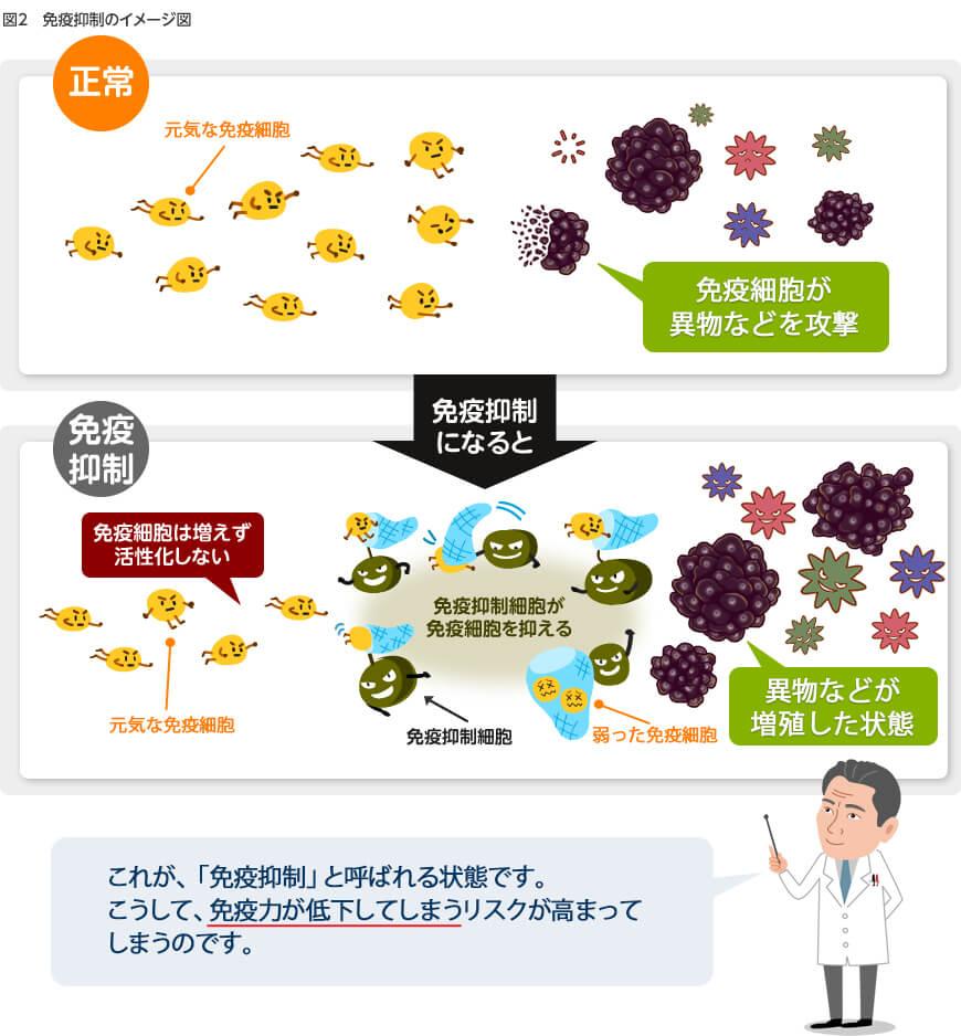 図2:免疫抑制細胞などが邪魔をして、免疫細胞は増えたり、活性化することができません。その結果、免疫細胞は、標的にたどり着くことや攻撃することができなくなってしまいます。