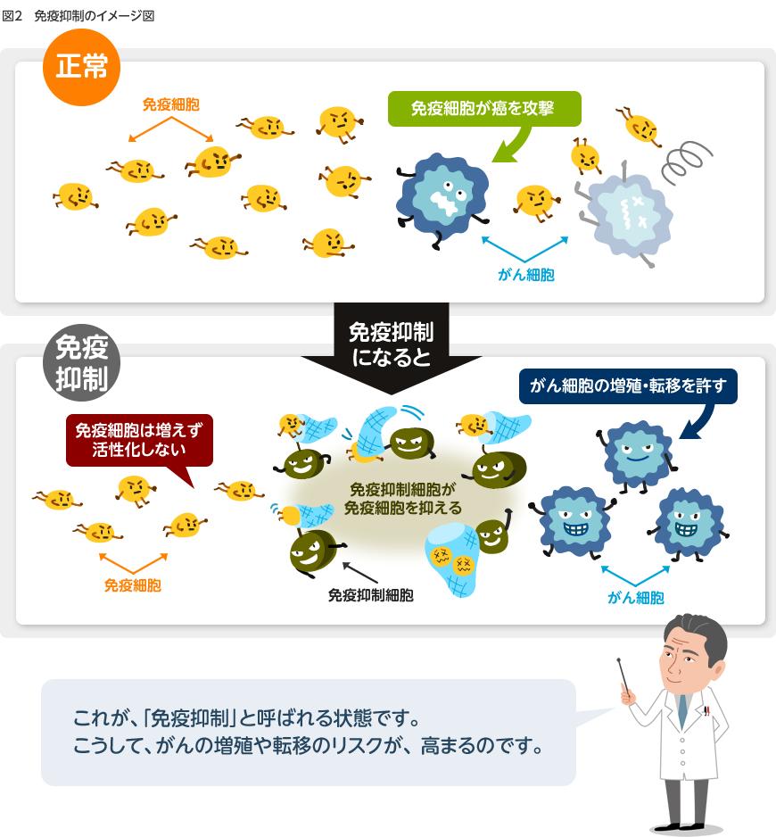 図2:免疫抑制のイメージ図免疫抑制になると、免疫抑制細胞などが邪魔をして、免疫細胞は増えたり、活性化することができません。その結果、免疫抑制細胞が免疫細胞を抑え、免疫細胞は、がん(癌)細胞にたどり着くことや攻撃することができなくなってしまいます。これによりがん(癌)細胞の増殖や転移のリスクが高まります。